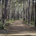 The Karri Trees