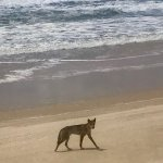 Photo of Cool Dingo Tours