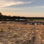 Somalisa Camp Foto