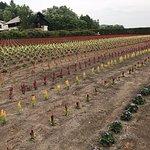 Photo of Farm Tomita