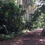 Pathway to the outdoor garden rooms