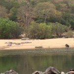 Across the river, that thing that looks like a tree trunk, is actually a crocodile!!