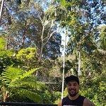 Φωτογραφία: Tamborine Rainforest Skywalk
