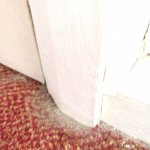 carpets filthy in all corners