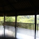Best yoga retreat in Ubud!