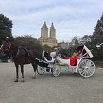 November Central Park Carriage Rides in NYC - The Official NYC Horse Carriage Rides Est.1979