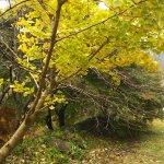 Obara Fureai Park / Shikizakura Foto