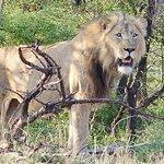 Tanda Tula Safari Camp Foto