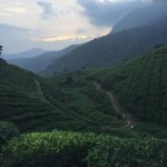 tea garden near resort