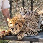 Photo of Moholoholo Wildlife Rehab Centre