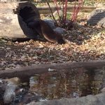 River otters - very active