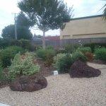 Attractive landscaping adjacent to pool, Hitching Post Studios Inn, Santa Cruz, CA