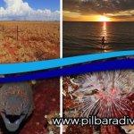 Pilbara Dive and Tours