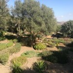 Foto de Necrópolis de Chellah