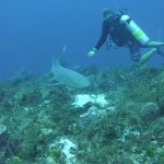 Dive Guide Luca and Nurse Shark