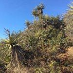 Foto de Torrey Pines State Natural Reserve