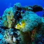Foto di Dolphin House Reef (Sha'ab Samadai)
