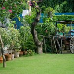 The garden and wheel cart at Casa Gorordo Museum