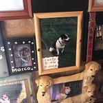 Dead Dog Saloon