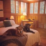 Hattie & Hazel enjoying a standard queen room