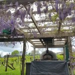 Bild från Charlie's Gelato Garden