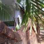 Photo de Ave Maria Beach Resort