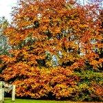 Cobtree Manor Park