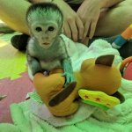 Foto de Bambelela Wildlife Care&Vervet Monkey Rehabilitation Farm