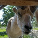 Photo of Yukon Wildlife Preserve