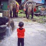 melihat gajah tunggang yang lagi makan