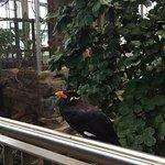 Vogel im Exotenhaus