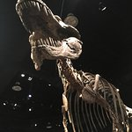 Foto de Museo Real Tyrrell