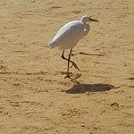 Photo of Steigenberger Coraya Beach