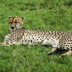 An animal relaxing in Nairobi National Park