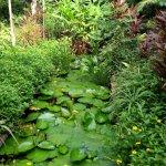 Lotus pond. So soothing.