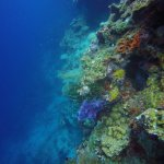 Some colourful corals, and many many fishes