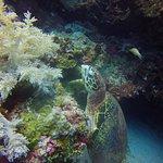 saw many sea turtles up close