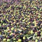 kendi üretimimiz olan zeytin ve zeytinyağlarını kullanıyoruz