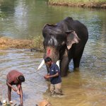 The latest recruit at the Elephant Camp - going through rituals