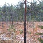 Oulanka National Park Visitor Centerの写真