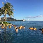Infinity Pool at Sheraton Waikiki