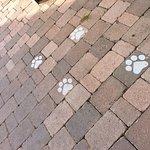 les chats sont les bienvenus et animent les espaces extérieurs avec grâce
