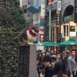 Grumpy Cat on a Ginza Street sign admiring the crowds- what a photo opportunity!