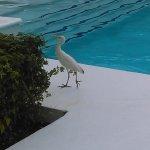 大鈀漢牙買加全包溫泉渡假村照片