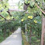 Arbors and Lemons