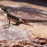 tata lizard by pool