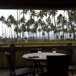 Coconut Palm Grove view from dining table