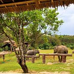 """The Hillside Retreat"" - retirement home for old Elephant!"