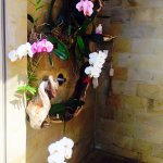 Orchid Shower