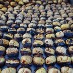 Roasted chestnuts for sale by street vendor Eminöu, Sultanahmet District, Istanbul 7/11-2017.